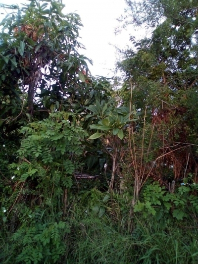 Land for Sale in Puttalama