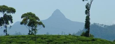 Agricultural Land for Sale at Ratnapura