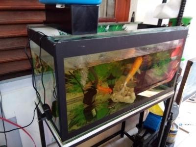 Sea Water Fish Tanks
