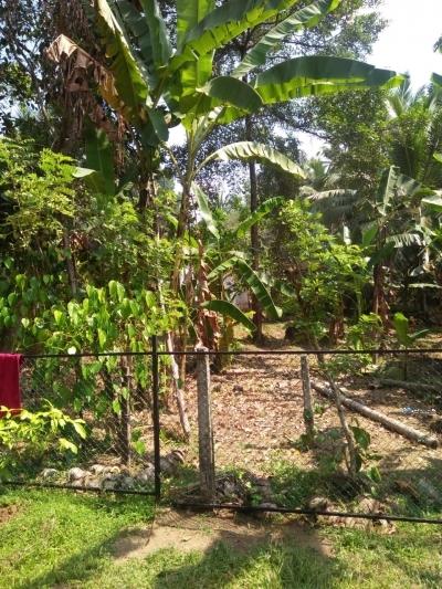 Land for Sale in Delgoda