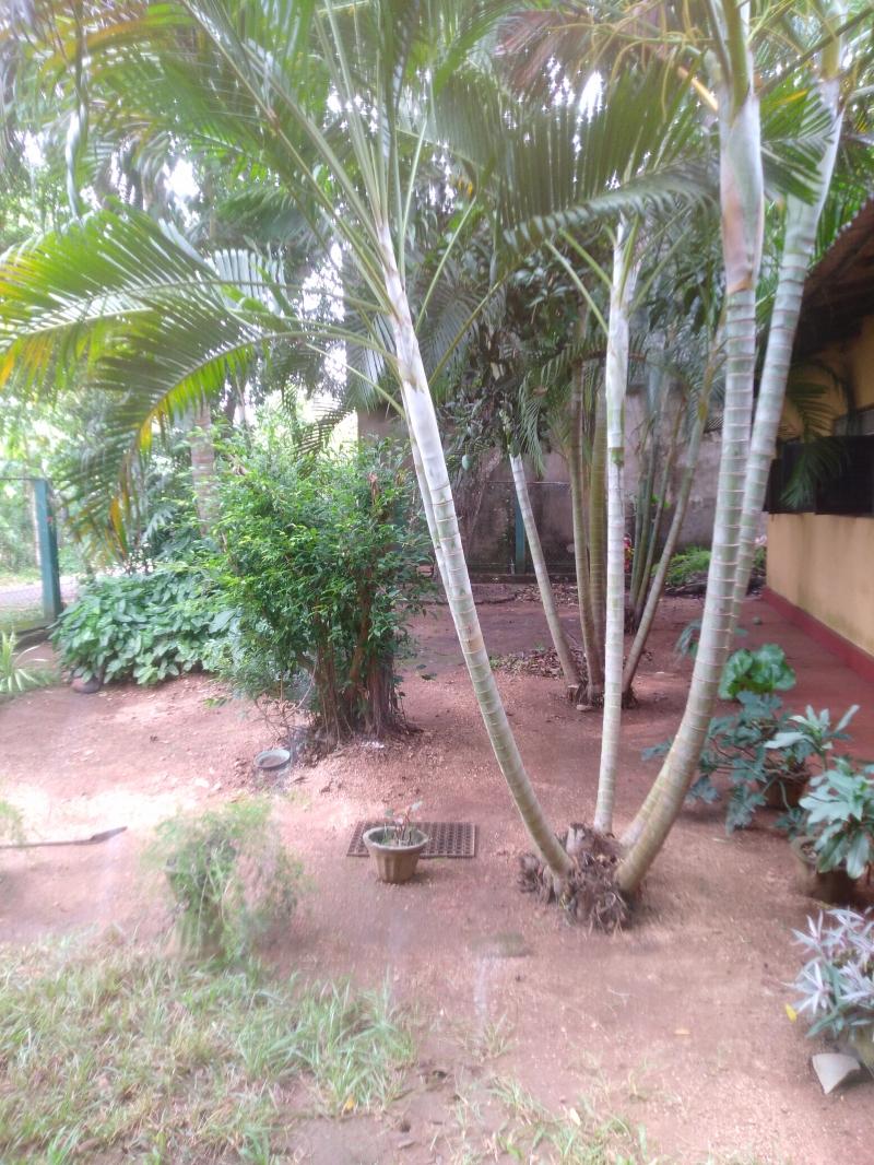 House for Sale in Anuradhapura