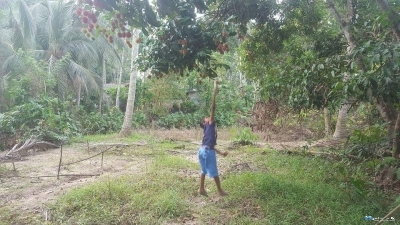 Land for Sale in Gokarella(Kurunegala)
