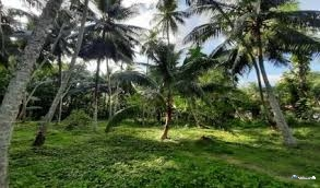 Land for Sale in Kuliyapitiya
