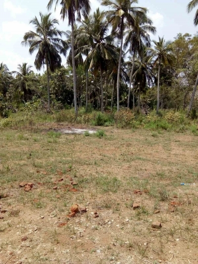 Coconut Land for Rent in Anuradhapura