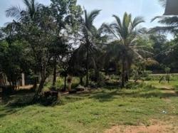 Land for Sale in Anuradhapura Tisawewa