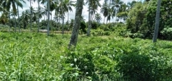 Land for Sale in Alutgama