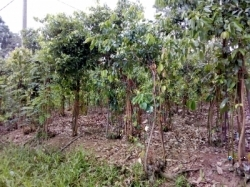 Cinnamon Land for Sale in Kurundugaha