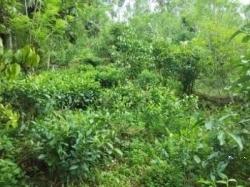 Land for Sale in Deniyaya