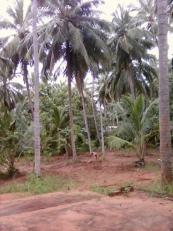 House with Land for Sale in Puttalam