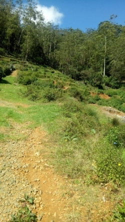 Commercial Land for Sale at Nuwara Eliya