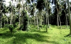 Commercial Land for Sale at Homagama
