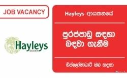 HR EXECUTIVE – Hayleys Group