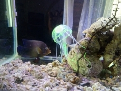 Sea Fish Tank