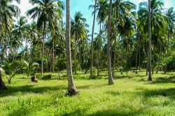Land for Sale in Alawwa (Kurunegala)