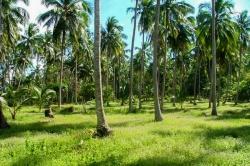 Land for Sale in Alawwa (Kurunegala)