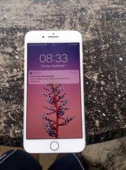 Apple iPhone 8 Plus 64GB (Used)