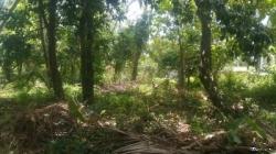 Land for Sale in Kalutara(Katukurunda)