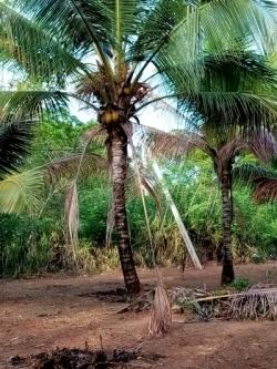 Land for Sale in Embilipitiya