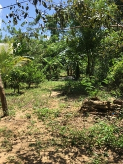 Land for Sale in Dambulla