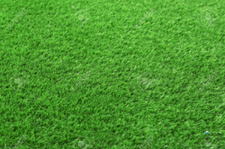 Landscaping Garden Services(ගෙවතු අලංකරණය)